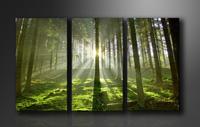 Leinwand Bilder fert gerahmt Bäume 160cm XXL 3 1130