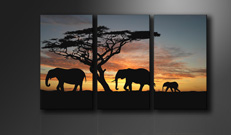 "Pictures on canvas length length 63"" height 35"" Nr 1066 africa"