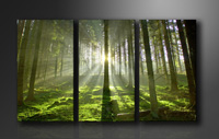 "Pictures on canvas length length 63"" height 35"" Nr 1130 nature"