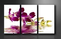 "Pictures on canvas length length 63"" height 35"" Nr 1132 orchid"