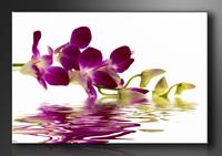 Leinwand Bild fert gerahmt Orchidee 80cm XXL 3 4132