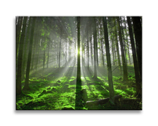"""Picture on canvas length length 15.7"""" height 11.8"""" Nr 4306  forest back light"""