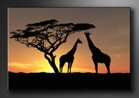 Afrika Bilder fertig gerahmt Bild 120x80cm XXL 5034