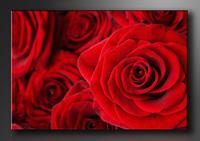 Rose Rot Bilder fertig gerahmt Bild 120x80cm XXL 5058
