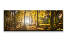 Leinwand Bild fert gerahmt Wald  120cm XXL 1 5722
