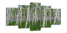 Leinwand Bild fert gerahmt Wald Birken grün 200cm XXL 5 6337
