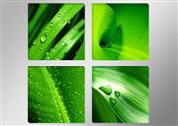 "Pictures on canvas length length 4 x 12"" height 12"" Nr 6601 green leaves"